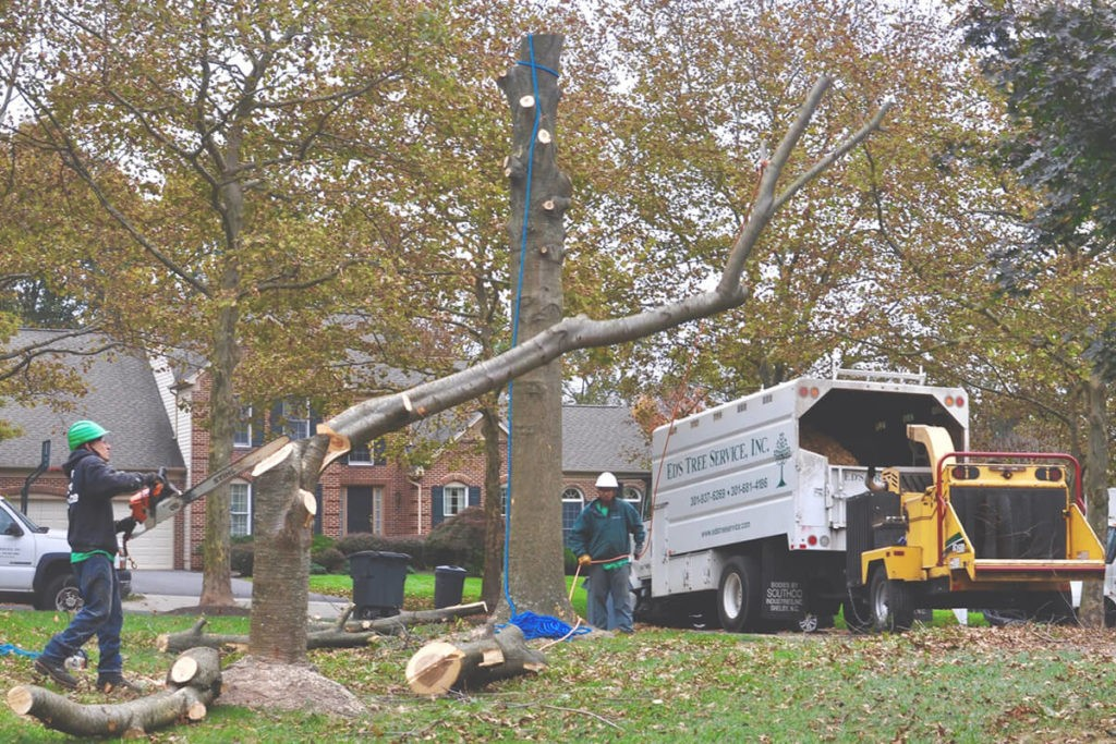 tree removal service