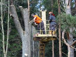 professional tree removal service
